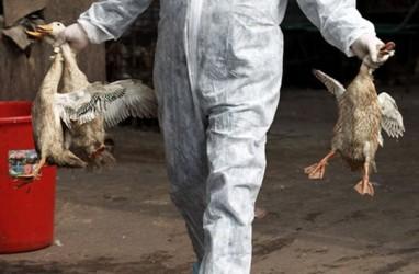 Kasus Flu Burung Meningkat, Korea Selatan Perluas Disinfeksi Massal
