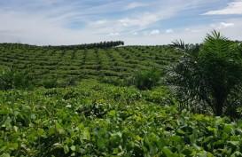 Pakar IPB: RPP Kawasan Hutan Jangan Rugikan Masyarakat Petani