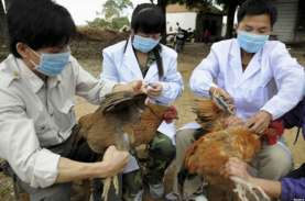 Korea Selatan Selidiki Kasus Dugaan Flu Burung Baru…
