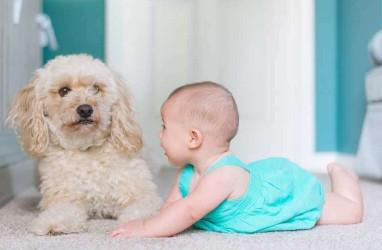 Tips Agar Bayi Cepat Berbicara
