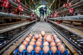 Libur Akhir Tahun, Harga Telur di Semarang Meroket