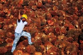 Larangan Impor Minyak Sawit asal Malaysia oleh AS…
