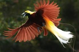 Cara Bertahan Hidup Saat Berburu Kicauan Burung di…