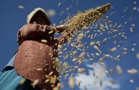 Pendapatan Petani Jateng Terpengaruh Penurunan Harga Gabah