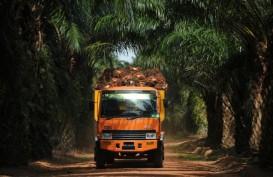 Dihantui La Nina, Harga CPO Ngamuk Hingga Tembus Rekor 10 Tahun