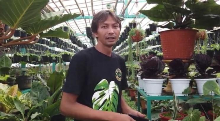 Pemilik Tio Florist Cuwartono memilik banyak koleksi anthurium. Dia mengaku penjualan per hari bisa menembus Rp200 juta. - tangkapan  layar Youtube