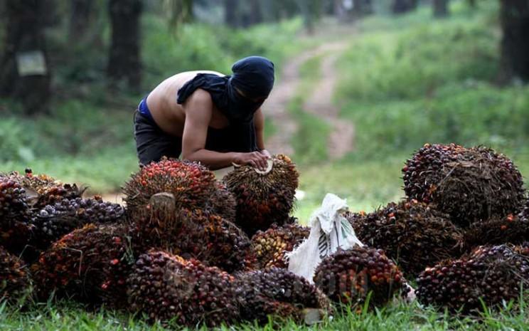 Pekerja menata kelapa sawit saat panen di kawasan Kemang, Kabupaten Bogor, Minggu (30/8/2020). Bisnis - Arief Hermawan P
