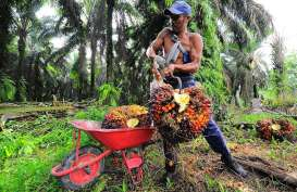 Turun Tipis, Harga TBS Sawit Riau Pekan Ini Rp2.174,31 Per Kilogram