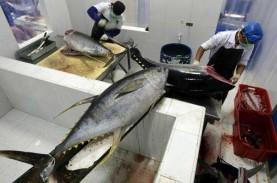 Maluku Tancap Gas Ekspor di Awal Tahun, 15 Ton Tuna…