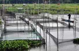 Ciptakan Sumber Ekonomi Baru, KKP Bangun Sentra Budidaya