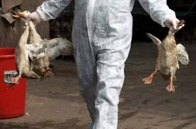 Virus Flu Burung Merebak di Tengah Pandemi Corona
