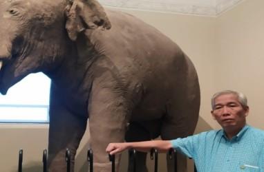 Lo Kheng Hong, 'Sulap' Rugi, & Kebangkitan Saham Gajah (GJTL)