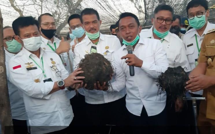 Porang semakin menjadi tren setelah Menteri Pertanian Syahrul Yasin Limpo melepaskan ekspor komoditas tersebut ke China, Selasa (19/11/2019).  - Kementan
