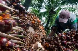 Kabar Baik dari Barat untuk Minyak Kelapa Sawit (CPO)