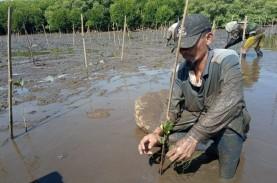 Pulihkan Ekosistem Pesisir, Tanam Mangrove 2020 Capai…
