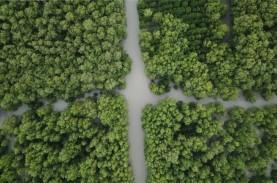 Pulihkan Ekosistem Pesisir, Ini Target Tanam Mangrove…