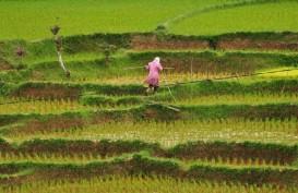 Pertumbuhan Ekonomi Sumbar 2021, Sektor Pertanian Jadi Andalan