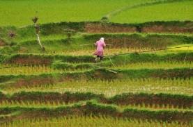 Pertumbuhan Ekonomi Sumbar 2021, Sektor Pertanian…