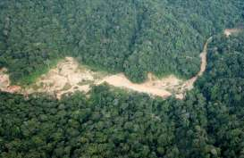 Pertambangan Rakyat di Papua Diprediksi Sumbang Pendapat Daerah Rp35 Miliar