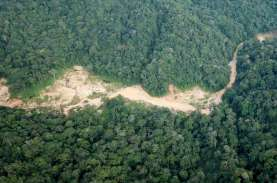 Pertambangan Rakyat di Papua Diprediksi Sumbang Pendapat…
