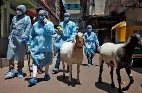 Masih Khawatir Keamanan Vaksin, India Tetap Tancap…