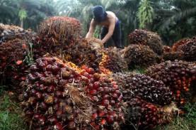 Masuki Periode Kontrak Baru, Harga TBS Sawit Riau…