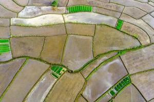 Kementan Meningkatkan Alokasi KUR Sektor Pertanian Senilai Rp70 Triliun Pada 2021