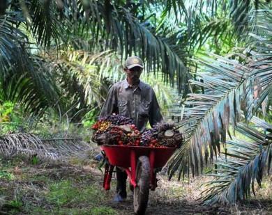 Historia Bisnis : Transparansi Lepasnya Aset Sawit Salim ke Malaysia Jadi Pertanyaan
