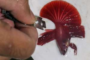 Jasa Salon Ikan Hias di Bogor Jawa Barat