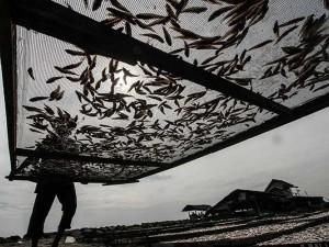 Meski Pandemi Covid-19, Produsen Ikan Kering di Aceh Masih Mampu Ekspor Ke Malaysia