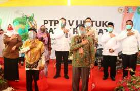 Kiat PTPN V Pertahankan Ekonomi Petani Plasma yang Direplanting