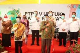 Kiat PTPN V Pertahankan Ekonomi Petani Plasma yang…