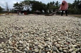 Ekspor Biji Kopi Bali Meningkat Drastis