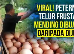 Begini Geramnya Peternak Ayam, Lihat Harga Jual Tidak Masuk Akal
