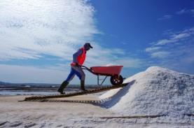 Kemenko Marves Targetkan Produksi Garam Nasional 3,1…