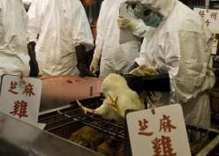 Historia Bisnis : Flu Burung Bikin Garuda Indonesia (GIAA) Cemas