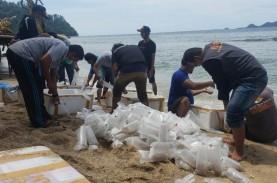Lagi, Lebih dari 80.000 Benih Lobster Hasil Sitaan…