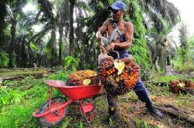 Petani Sawit Muba Panen 1.000 Ton TBS Hasil Replanting…