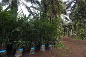 Replanting Lahan Sawit di Sumut Terealisasi 11.000…