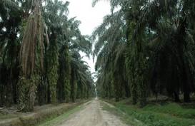 Program Sawit Berkelanjutan Masih Lamban di Kalimantan Timur