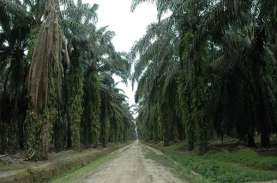 Program Sawit Berkelanjutan Masih Lamban di Kalimantan…
