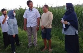 70.000 Ton Gula Petani Jatim Menumpuk, Negara Diminta Berperan