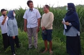 70.000 Ton Gula Petani Jatim Menumpuk, Negara Diminta…
