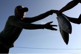 Pemerintah Dorong Pabrikasi Hidrolisat Protein Ikan
