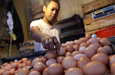Pemerintah Prediksi Harga Telur Ayam Terus Turun, Sampai Kapan?