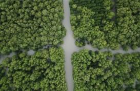 Kementerian LHK Bakal Tanam 5.000 Bibit Mangrove di Papua