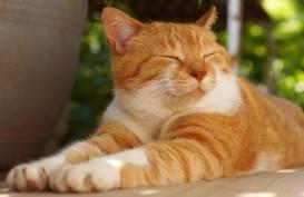Bolehkah Kucing Diberi Makan Nasi? Ini Kata Dokter Hewan