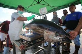 Raih Sertifikat MSC, 11.000 Ton Tuna Indonesia Siap…