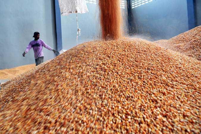Pekerja mengemas jagung impor yang akan didistribusikan ke peternak di Gudang Bulog, Surabaya, Jawa Timur, Kamis (24/1/2019). - ANTARA/Zabur Karuru
