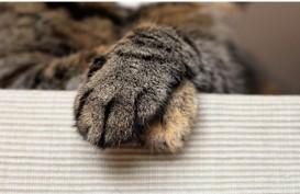 Tragis! Ibu Ini Bunuh Kucing untuk Obati Asma Suaminya